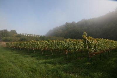 Auxerrois im Nebel