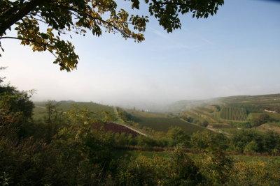 Bischoffingen im Nebel