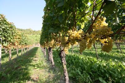 2007 Chardonnay
