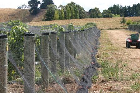 New Zealand Vineyards und nets